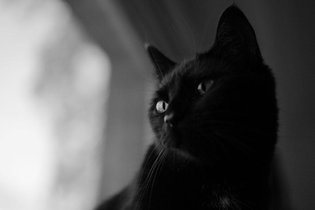 chat noir photo noir et blanc