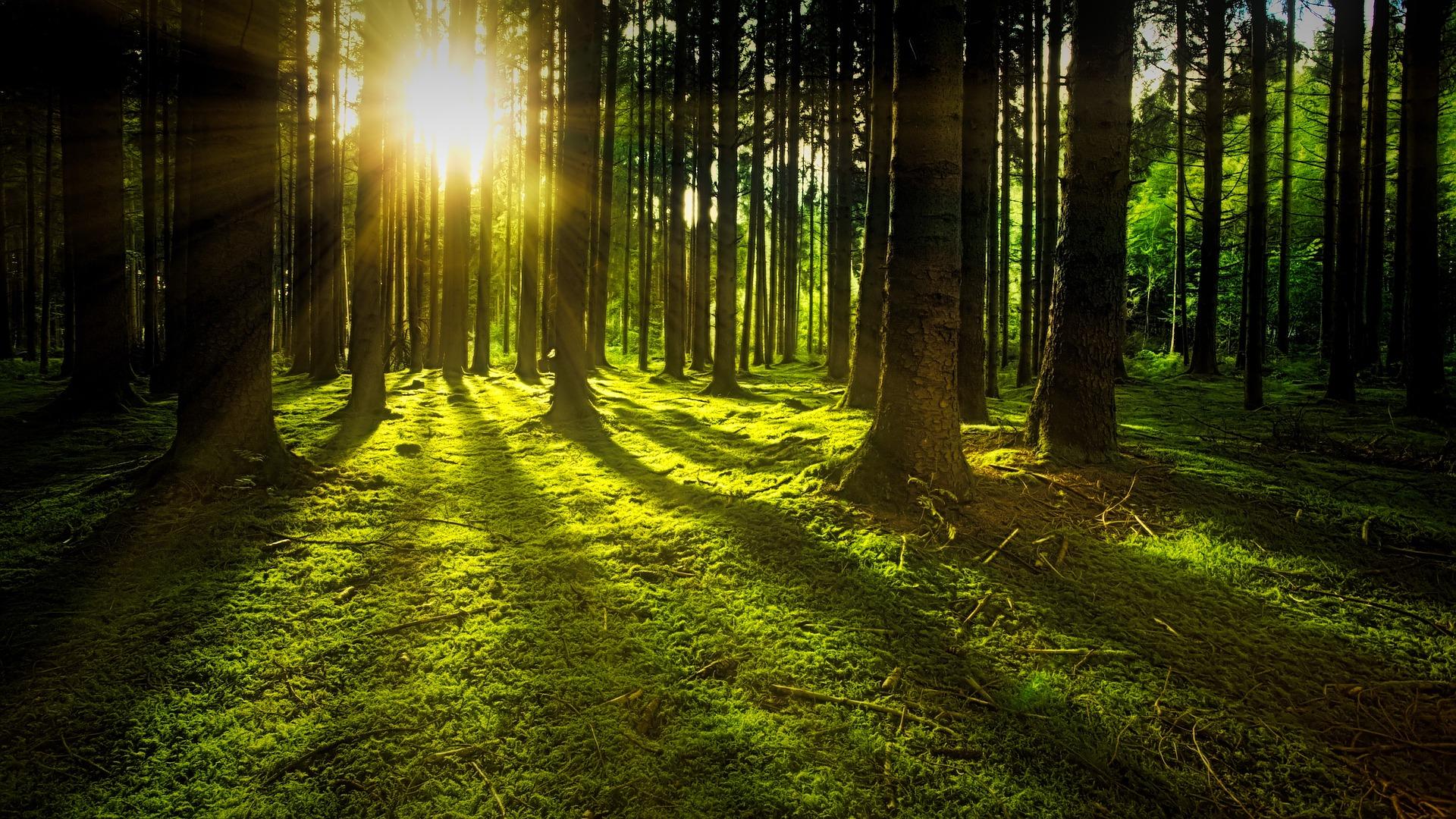 soleil forêt rayons lumière