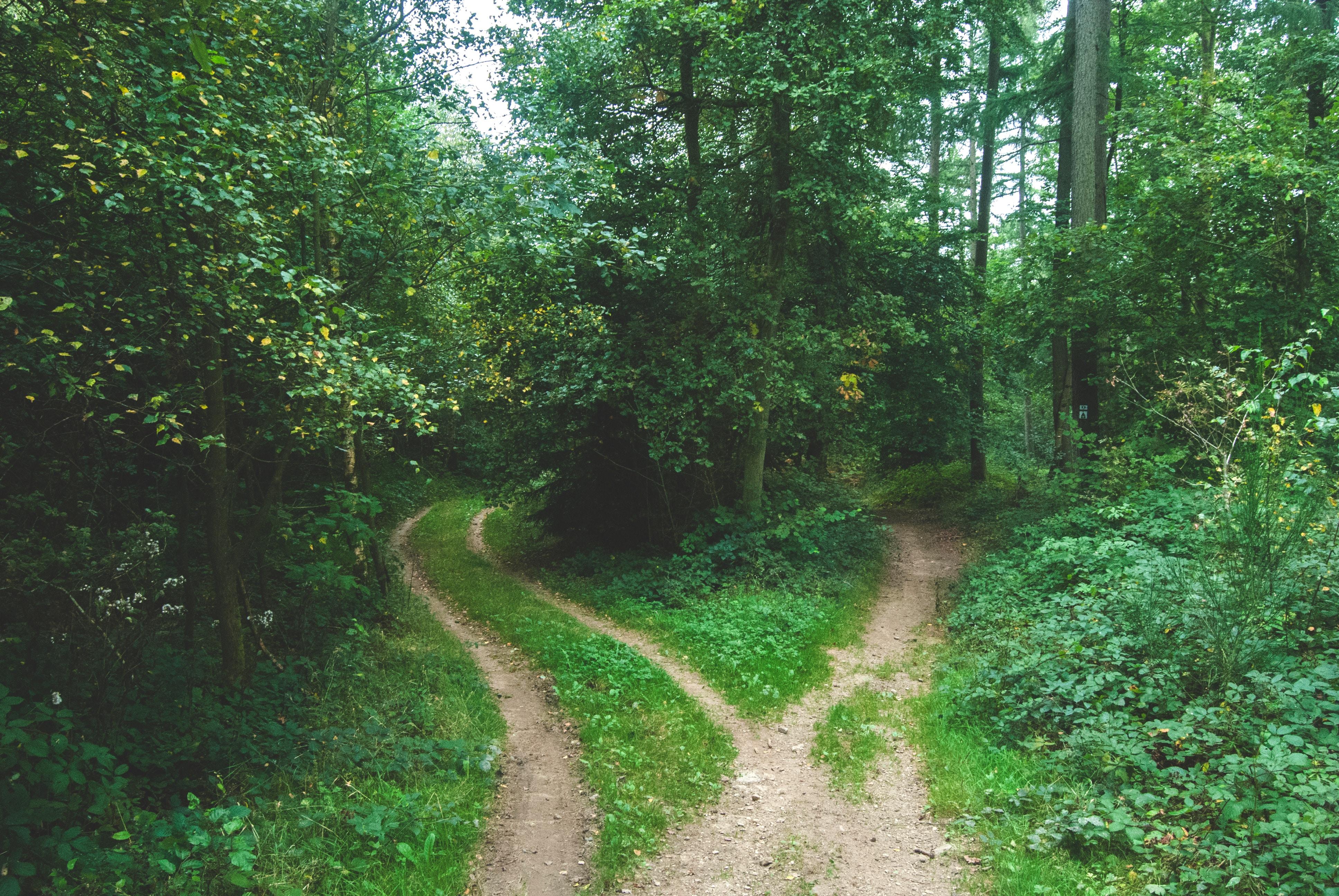 deux chemins qui se séparent dans le bois