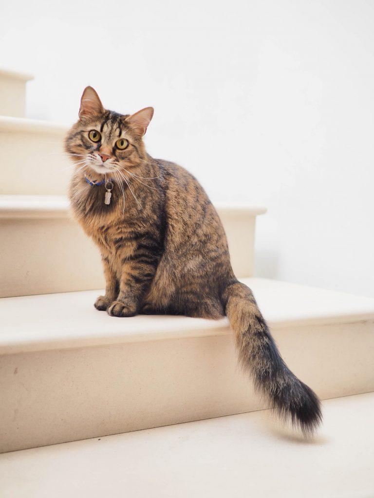 chat dans escaliers