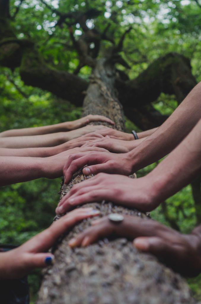 mains sur un arbre