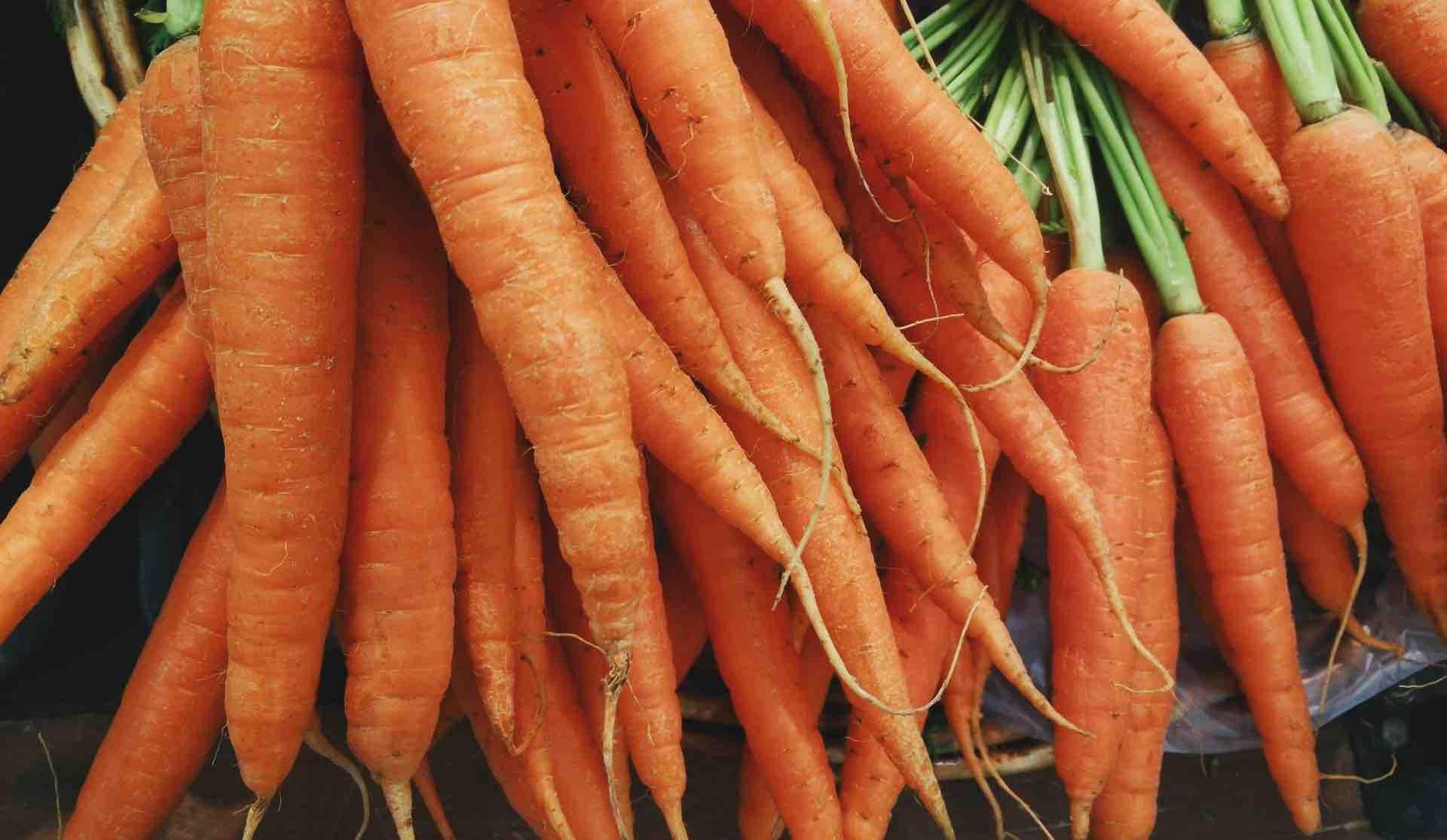 carottes orange poignée