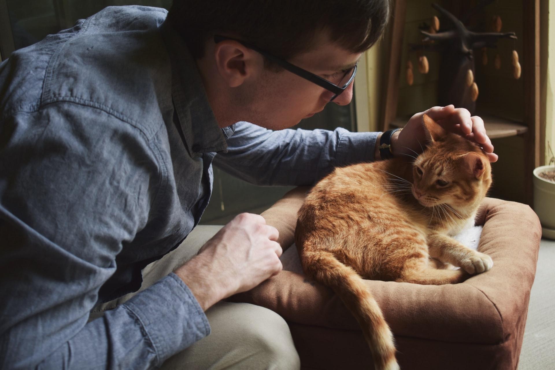chat roux homme vétérinaire