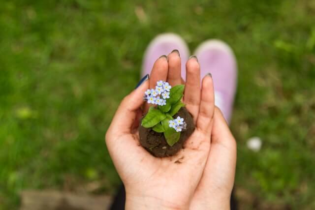 main fleur vie petit germe
