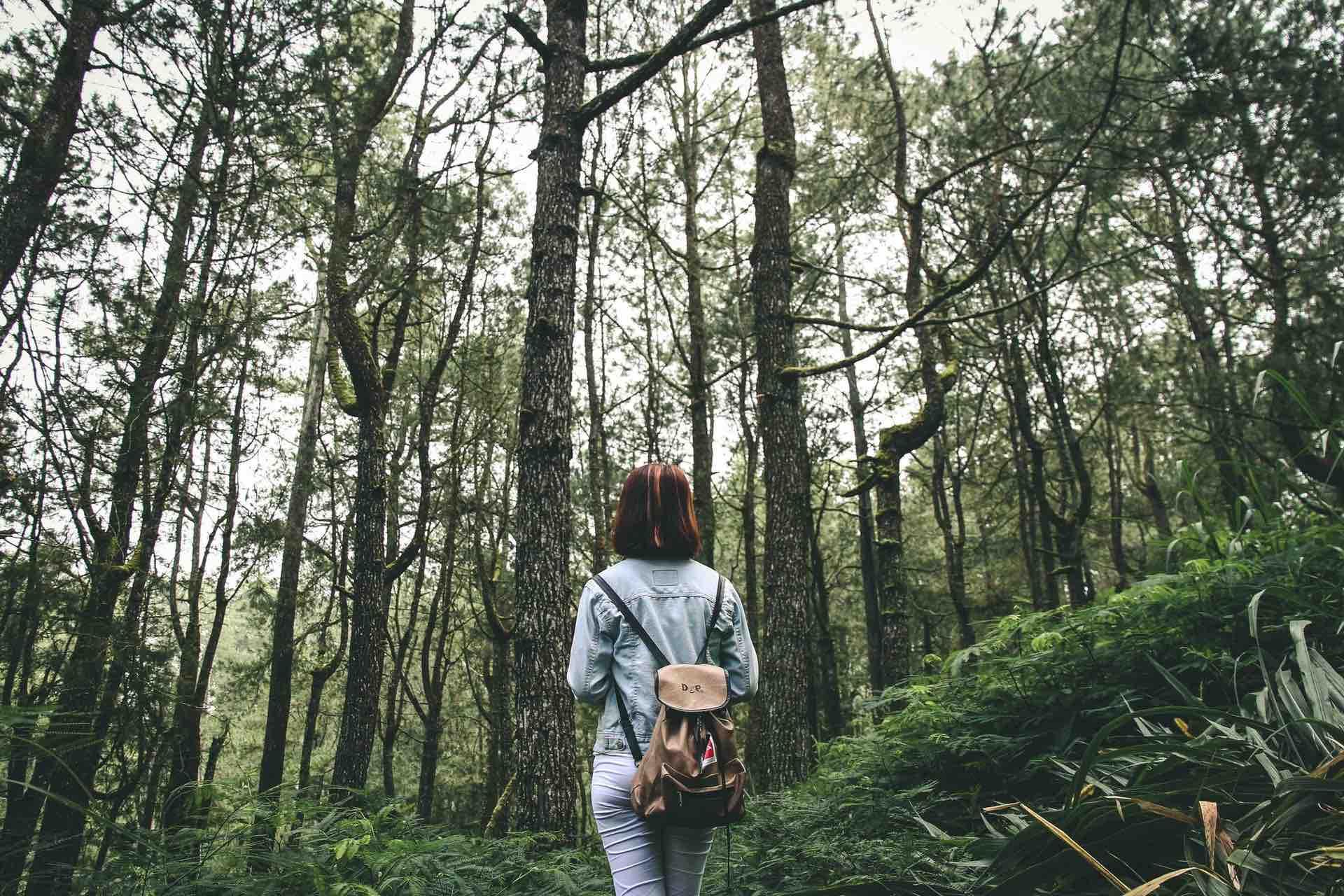 nature forêt verdure femme perdue