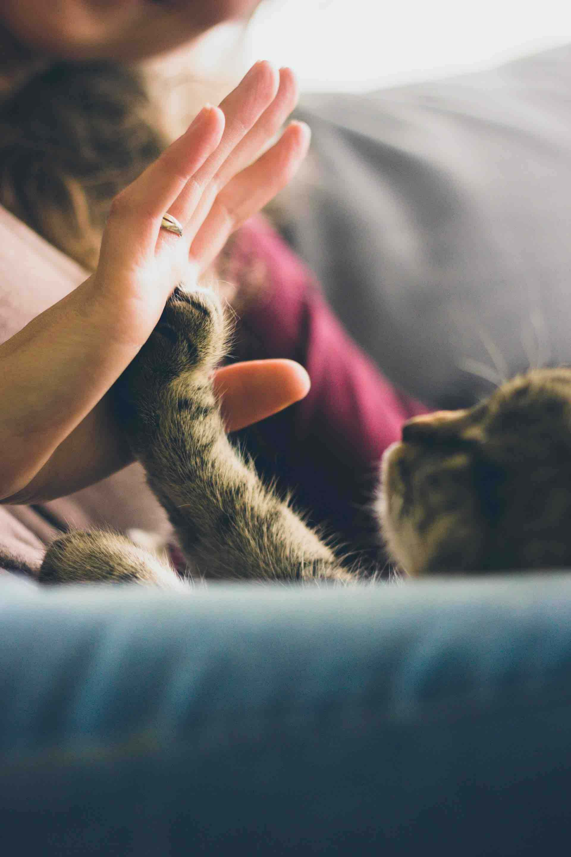 chat humain main amour tendresse