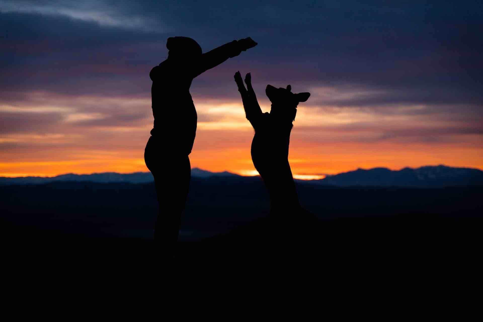 homme chien coucher de soleil complicité animal