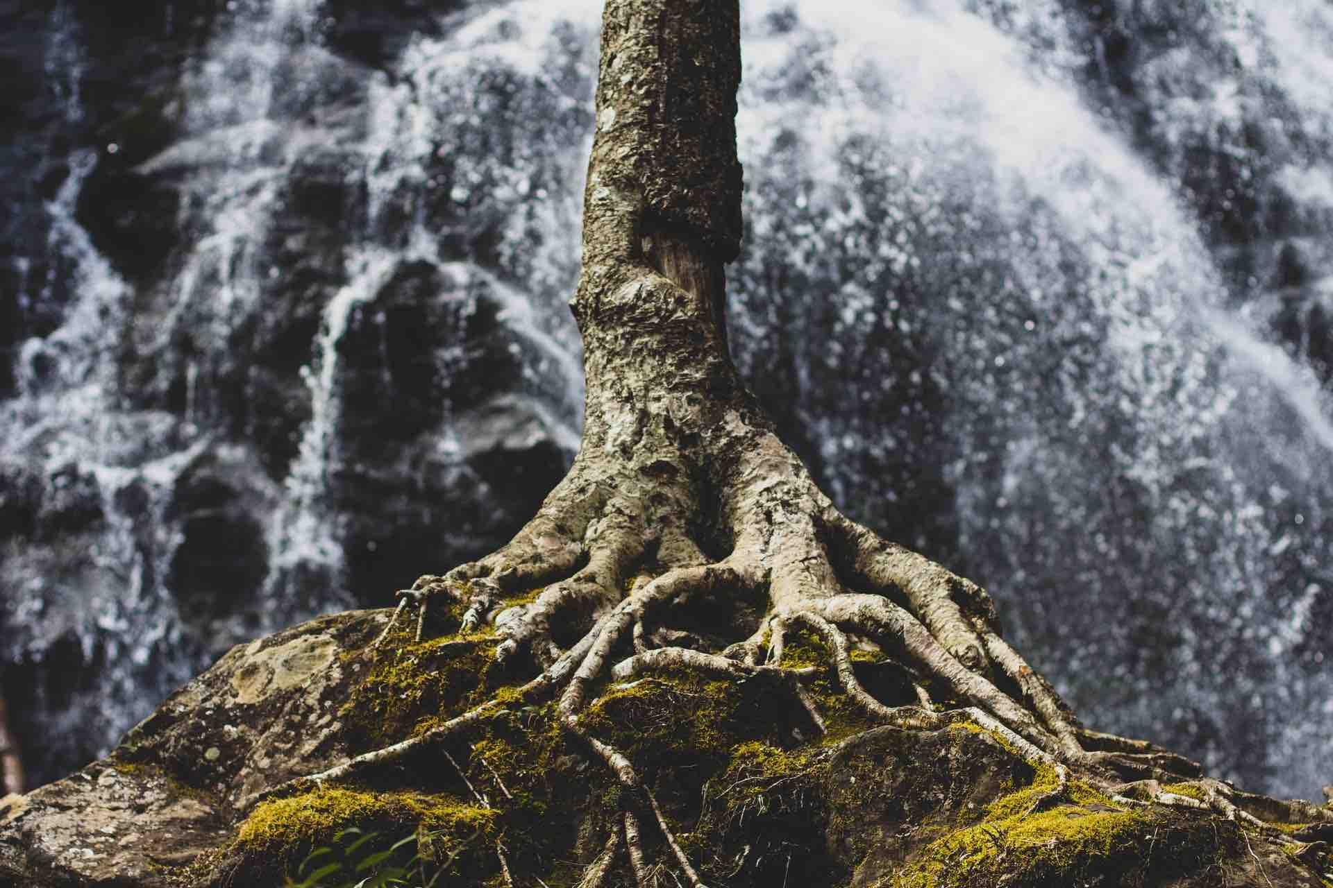 racine chutes d'eau nature