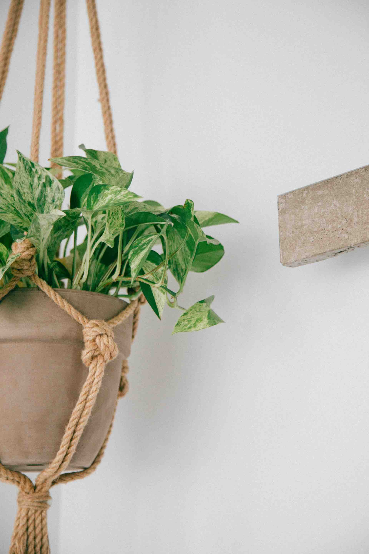 plantes pendante mur décoration vert