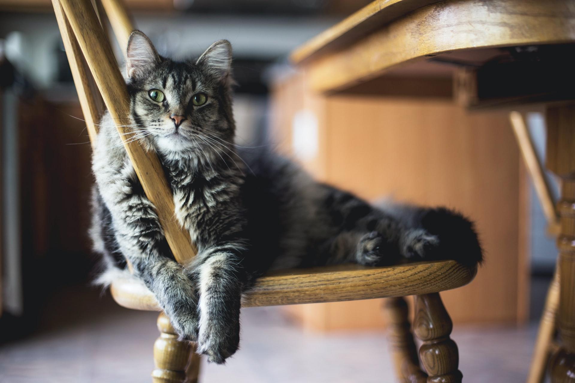 chat ennui chaise