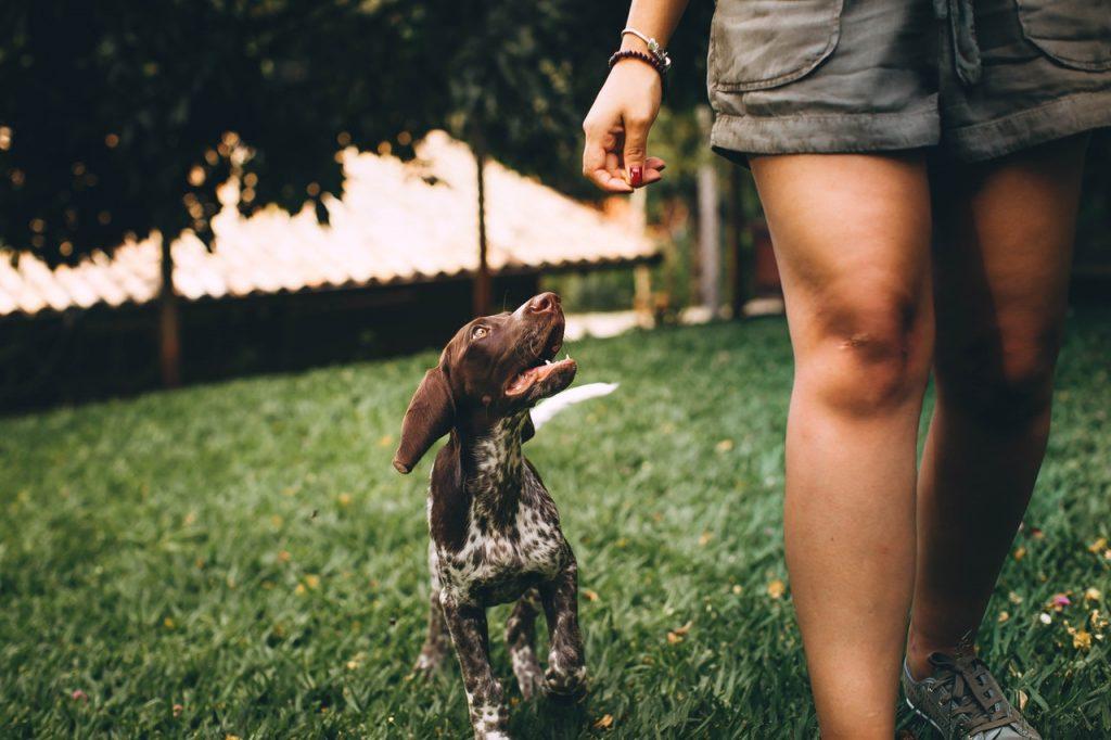 chien femme gazon