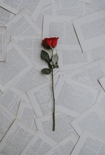 rose, rouge, lettre, papier, écriture