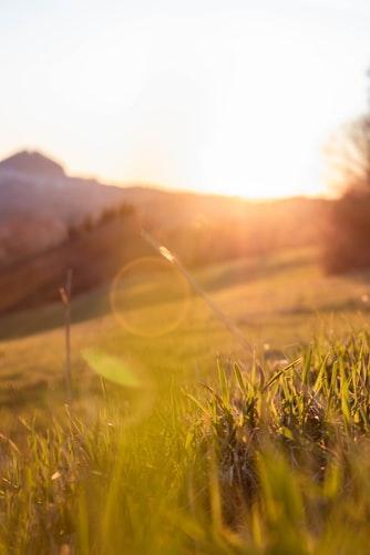 soleil, champs, nature