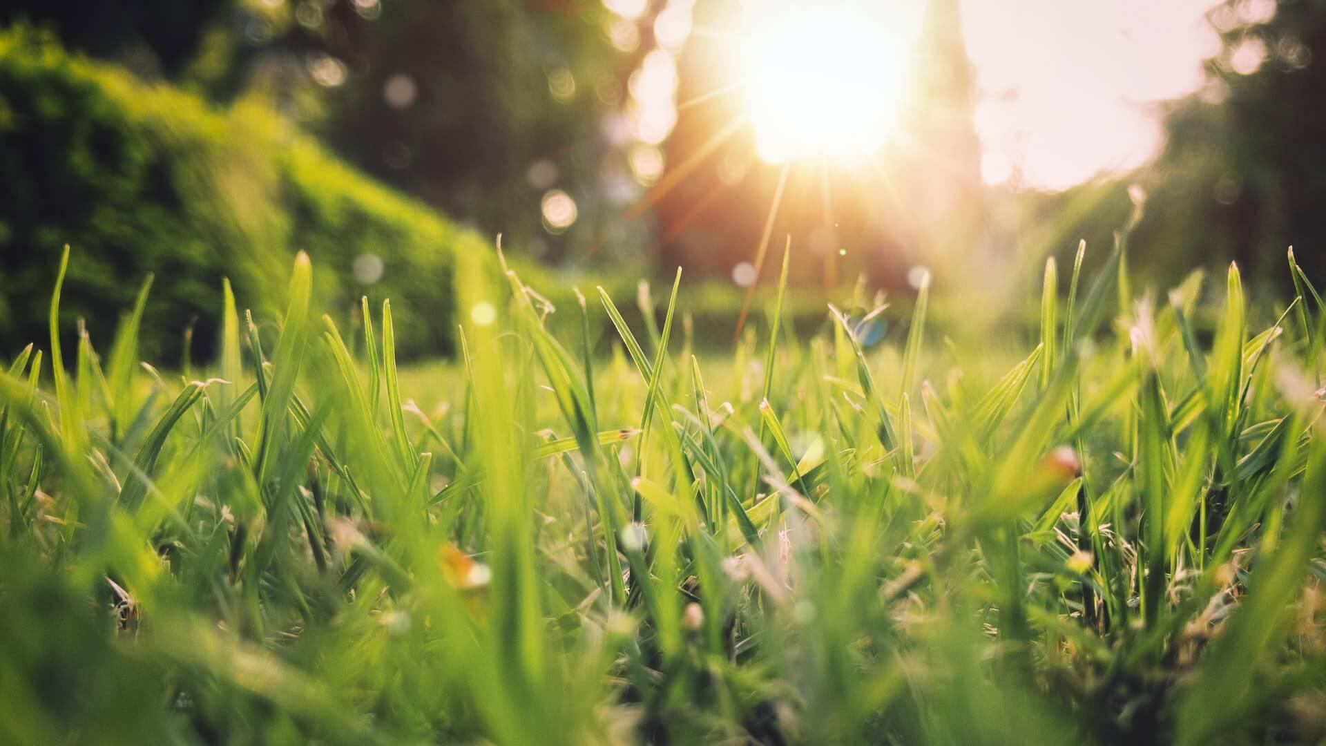 gazon soleil printemps