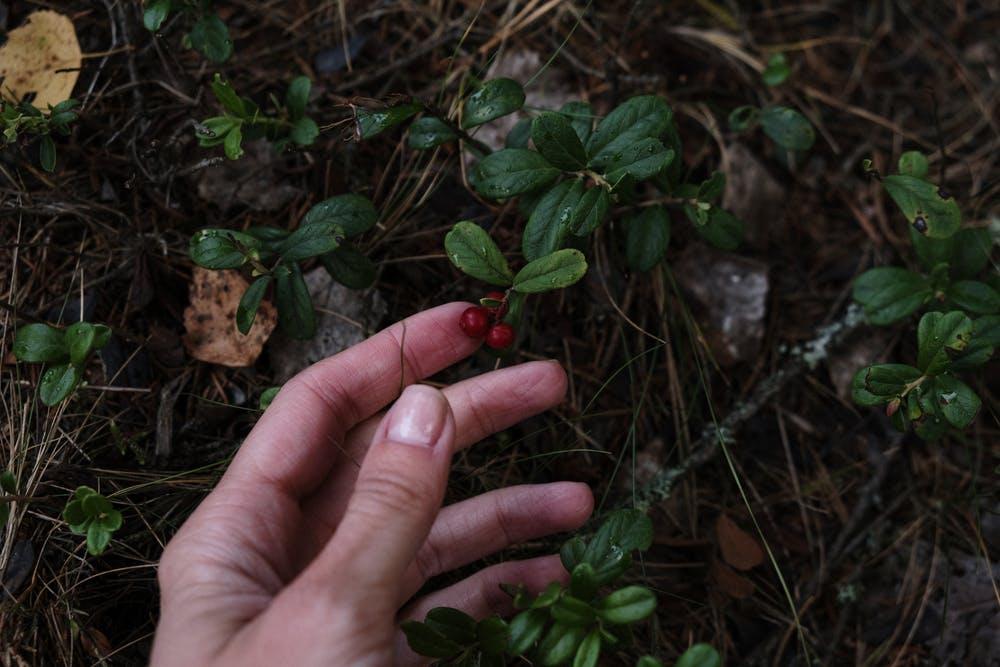 mains plante verte