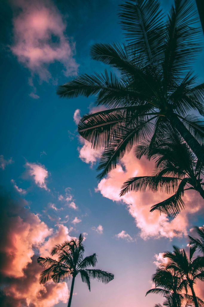 été palmier vacances