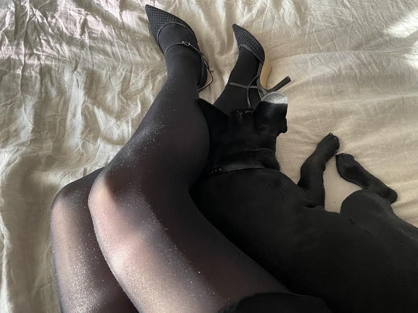 jambes collant chien lit