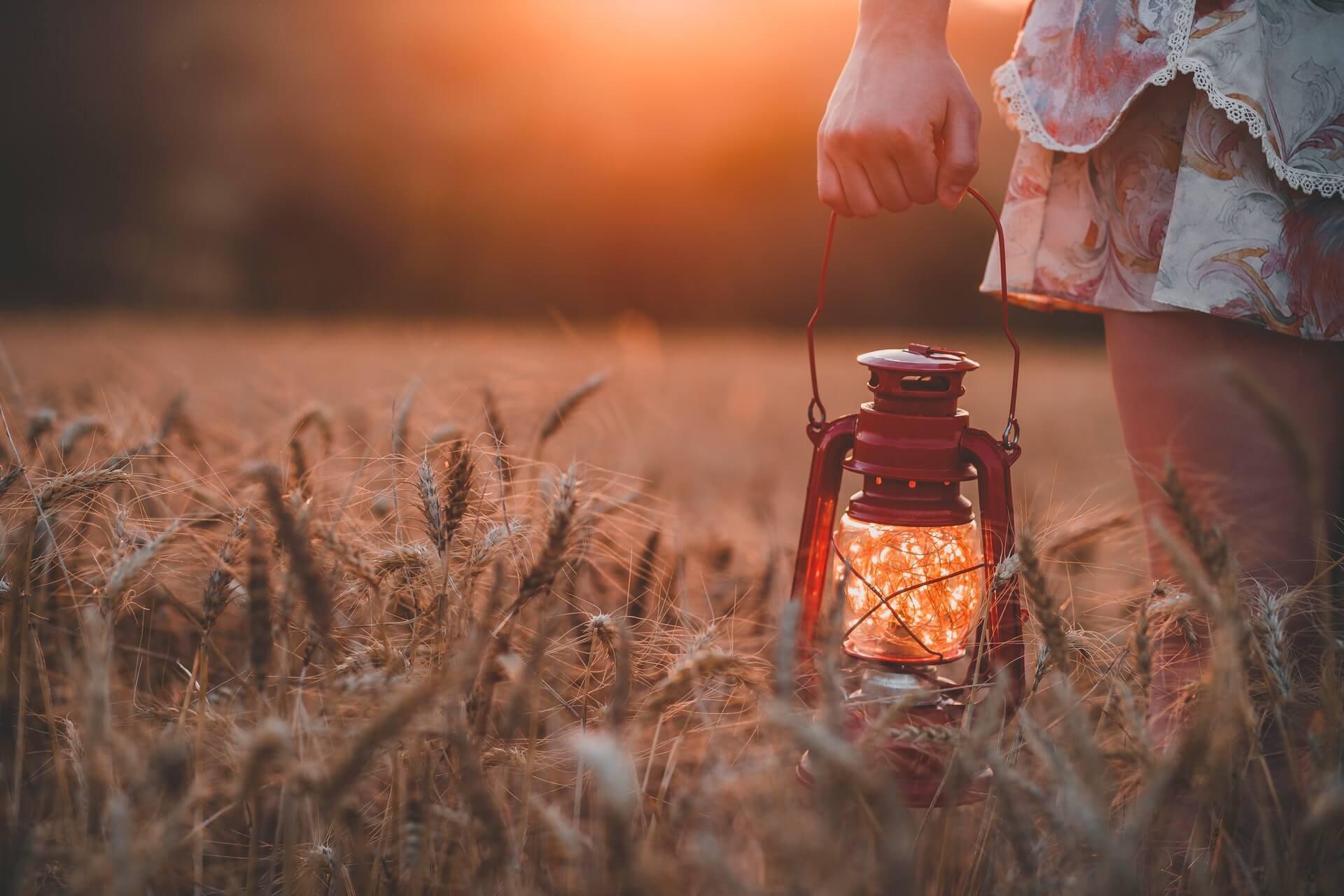 recherche, seule, champs, lumière