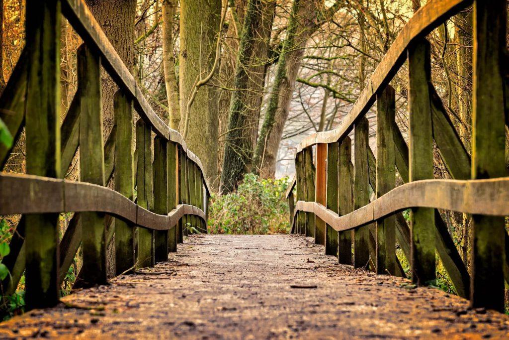 pont nature chemin