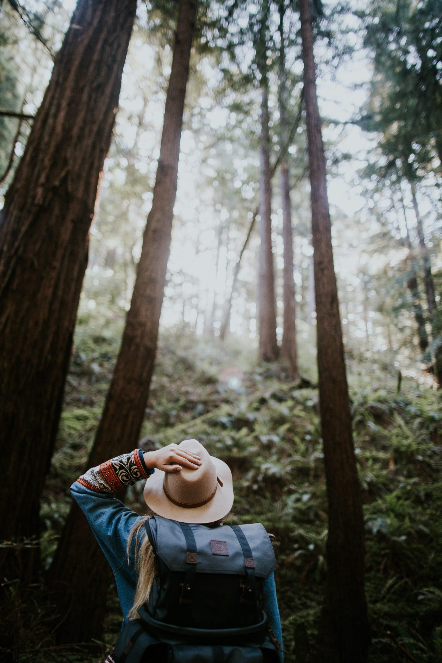 Randonnée pédestre hike hiking forest femme