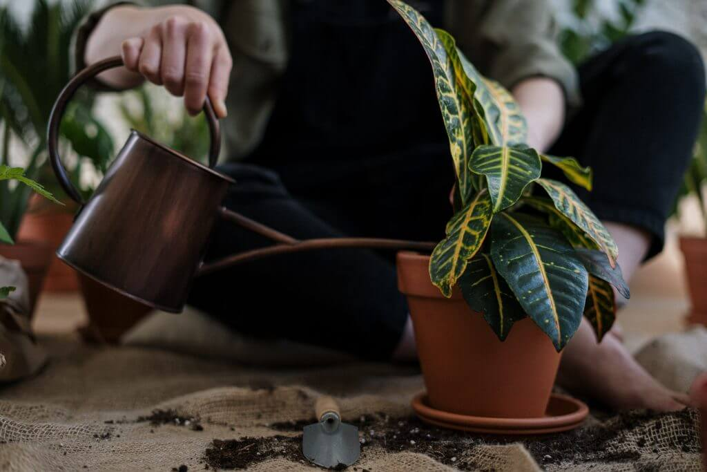 Arrosage de plantes